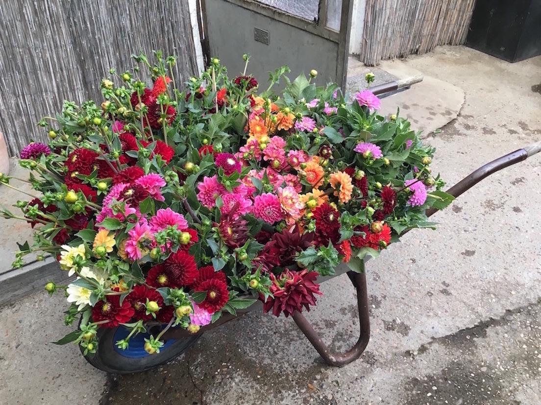 Floristik und Gärtnerei Rückemann Nußloch